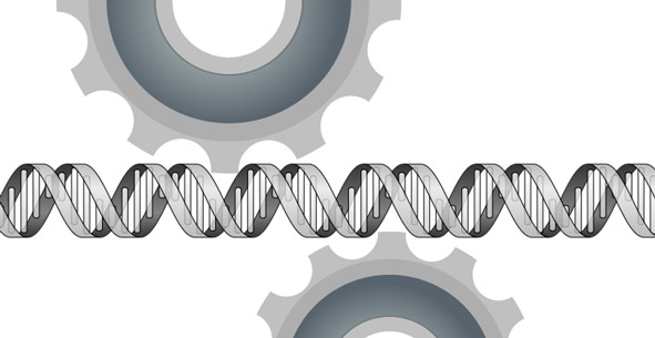 DNA passing through gears