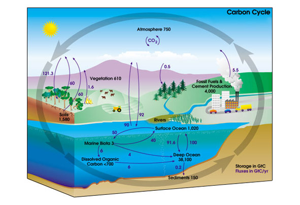 illustration of the global carbon cycle