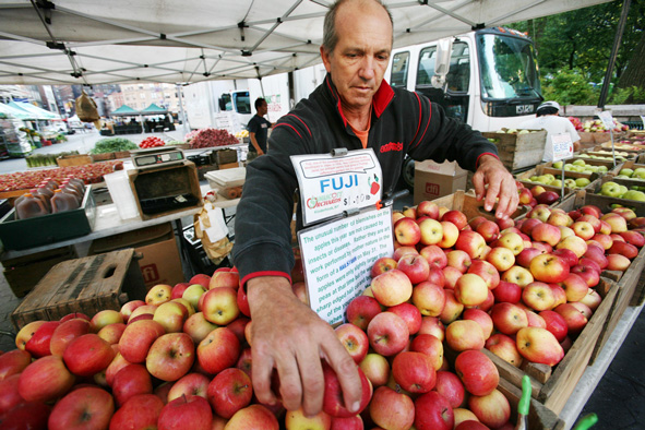 Ron Samascott organizes apples from his orchard in Kinderhook, N.Y. at the Union Square Greenmarket on Friday, June 20, 2008 in New York.
