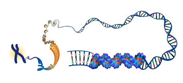 Court Rules that DNA Is Information, Not Intellectual Property