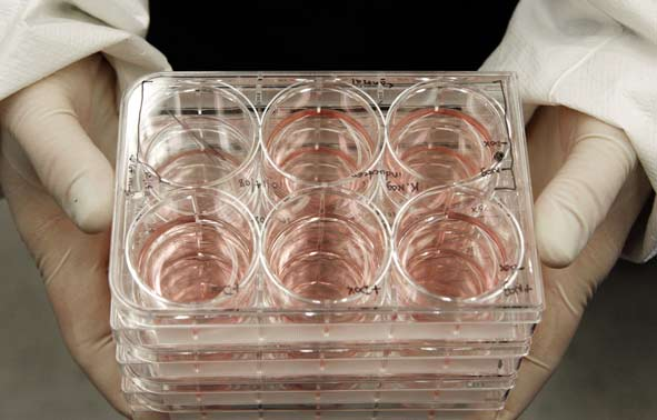 A Researcher holds trays of human embryonic stem cells